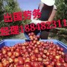 江苏无语言学历要求正规出国劳务派遣工作签证