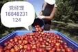 出國勞務農場采摘工種植工月薪3萬