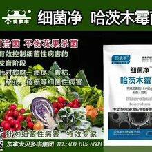 哈茨木霉菌杀菌剂厂家_真菌性杀菌剂_生物杀菌剂图片