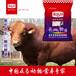 牛飼料十一赤樂川質量可靠效果可信賴!