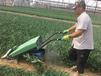韭菜收割機-韭菜割曬機-割曬機廠家