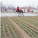 新疆大面積打藥施肥機-棉花種植打藥機