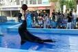 海洋展海狮表演活体企鹅海洋生物展示