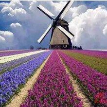 出售荷兰风车荷兰风车制作厂家租赁出售荷兰风车