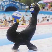 海洋展出租海洋展租赁企鹅表演出租图片