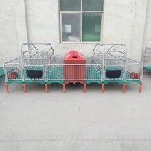 母豬產床落地式豬用復合板單雙體分娩床兩用定位欄養豬設備定做