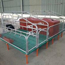 定做母豬產床豬用單雙體分娩床保育床兩用定位欄養豬設備