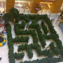 迷宫制作绿植迷宫出租大型绿植迷宫租赁出售