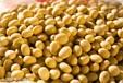 陕西滕灿有机农业有限公司--有机种子黄豆