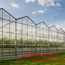 玻璃大棚用于蔬菜花卉玻璃大棚种植养殖温室大棚工程