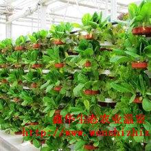 白色梯形草莓立体种植槽草莓立体种植架无土栽培设备批发图片