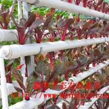瓜果无土栽培环保荷兰桶蔬菜水培管道无土栽培设备定制图片