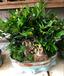 杭州绿植盆栽租赁,鲜花植物租摆出售