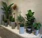 杭州绿植植物租摆