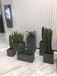 杭州全城绿植植物租摆,鲜花出售,开业花篮