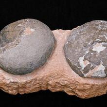 上门收购恐龙蛋化石价格走势图片