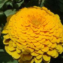 现在种什么草花十月份正值花期图片