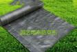 防草布一般不透光除草布既耐摩擦又抗老化的果園防草布
