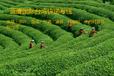 紅酒茶葉香菇寄臺灣什么渠道可以走臺灣海運快專線