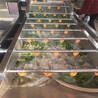 翻浪洗菜机果蔬加工设备洗菜机家用果蔬洗菜机自动洗菜