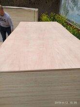 供应漂白胶合板环保家具板包装板多层板图片