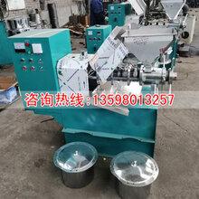 花生榨油机商用花生榨油机成套设备螺旋榨油机图片