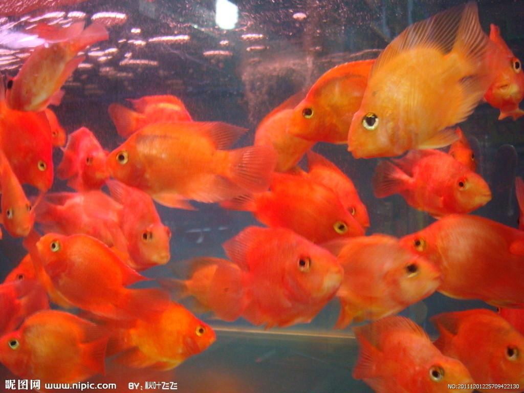 鱼缸订做鱼缸维修鱼缸清洗鱼缸造景快速上门服务