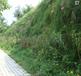 咸宁矿山护坡草种类草籽花籽厂家批发价格
