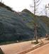 咸宁矿山边坡治理恢复绿化施工用的草籽灌木种子哪提供?