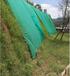 采购咸宁矿山绿化生态复绿效果好易打理的草籽