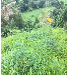 咸宁矿山绿植点缀花籽草籽混合播种选取