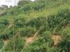 咸宁矿山绿化工程灌木种子