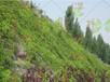 咸宁大矿山复绿工程:无纺布草籽价格
