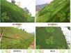 湖北矿山山体绿化工程无纺布草籽一体化出售