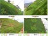 咸宁绿化工程喷播承接矿山/荒山/边坡绿化项目喷播草籽