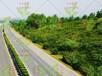 供應梅州高速邊坡防止路基土方滑坡常綠灌木種子市場