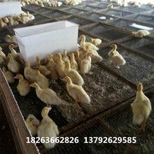 塑料喂料箱喂料箱价格鸡?#32423;?#19987;用料箱