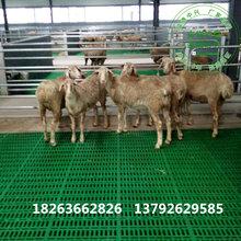 山羊漏粪板羊地板塑料网床
