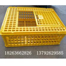 蛋鸡转运笼肉鸡周转箱鸡运输笼