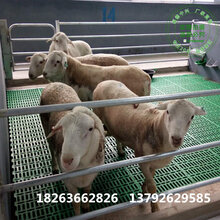 新式塑料羊床羊圈用塑料垫板羊用高架床