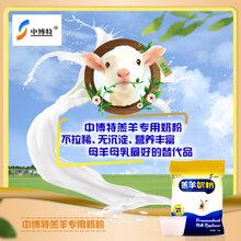 小羊羔的饲养管理及注意事项中博特羔羊奶粉