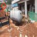 廣西梧州成品混凝土整體式化糞池廠家直銷鋼筋混凝土化糞池