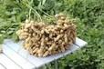 花生高產套餐批發三遍藥蕓多樂豐收廠家水溶肥葉面肥農化