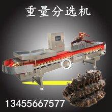 商用小龙虾重量检测机鸡腿鸡翅重量分选机全自动分选机图片
