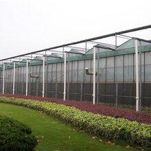 山东蔬菜基地
