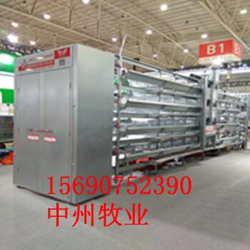 中州鸡笼自动化畜牧养殖设备小鸡笼蛋鸡笼肉鸡笼