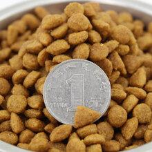 畅销小型宠物饲料加工设备创业小投资的选择