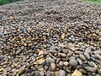 黑色砾石水洗石日式庭院碎石子深灰色园林工程建筑石材