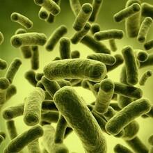 微生物检验注意事项-百检网图片