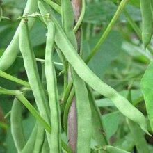 绿色有机蔬菜检测-食品检测机构